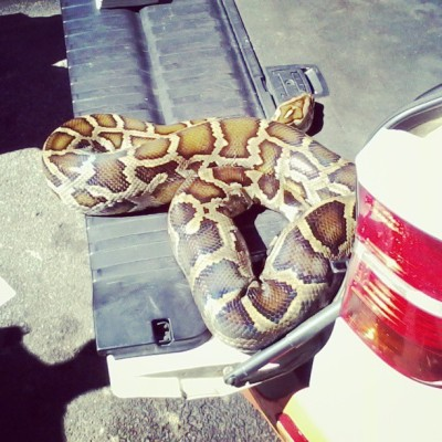 #live ass #snake in the back of a car… Gawd. Only in #joburg #cbd #jozi #creepy #love it though… The owner sells #muti soap and all that good stuff.