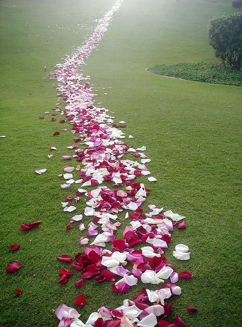 Rose Petal Path, Maui, Hawaii photo via sheila