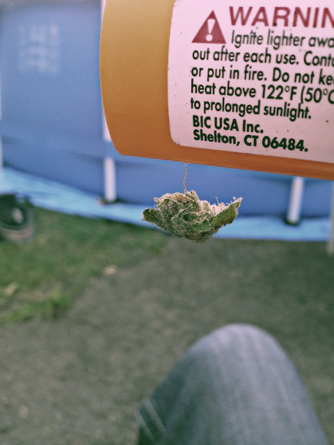 smokeymcpotsmoker:  smokeymcpotsmoker: had to take a pic. so stickk  i command you to reblog