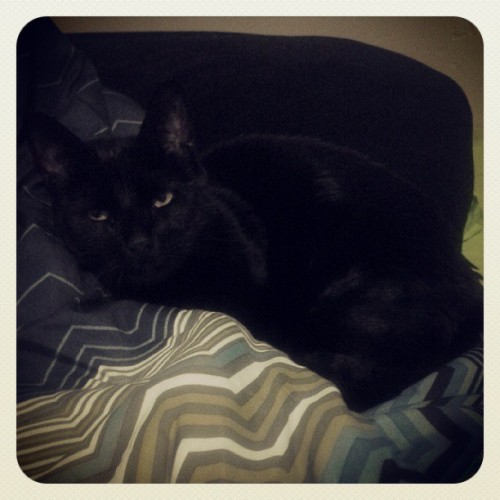 My aunt & uncle's moew moew, named Batman, loves my bed. #kitty #cat