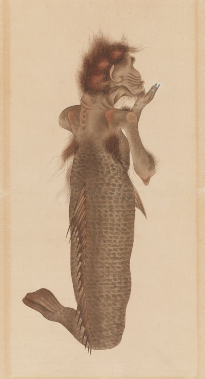 "wnycradiolab:  yajifun:  arsvitaest:  Undersea creature (ningyo or mermaid) Author: Kawahara Keiga (Japanese, ca. 1786-1860)Date: ca. 1828Medium: Ink and color on Dutch paperLocation: Freer and Sackler Galleries, The Smithsonian's Museums of Asian Art Ningyo (人魚, ""human fish,"" often translated as ""mermaid"") is a fish-like creature from Japanese folklore. Anciently, it was described as having a monkey's mouth with small teeth like a fish's, shining golden scales, and a quiet voice like a skylark or a flute. Its flesh is pleasant-tasting, and anyone who eats it will attain remarkable longevity. However, catching a ningyo was believed to bring storms and misfortune, so fishermen who caught these creatures were said to throw them back into the sea. A ningyo washed onto a beach was considered an omen of war or calamity.  — Wikipedia  川原慶賀  Much cooler than the Disney version, don't you think?"