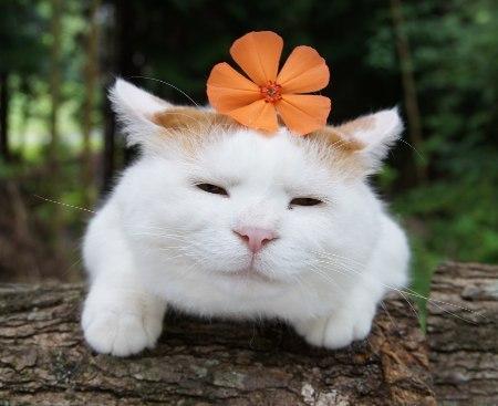 "cybergata:  ""my mantra is an orange flower."""