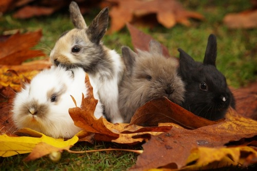 bunniesarethebest:  Autumn is here! -batb