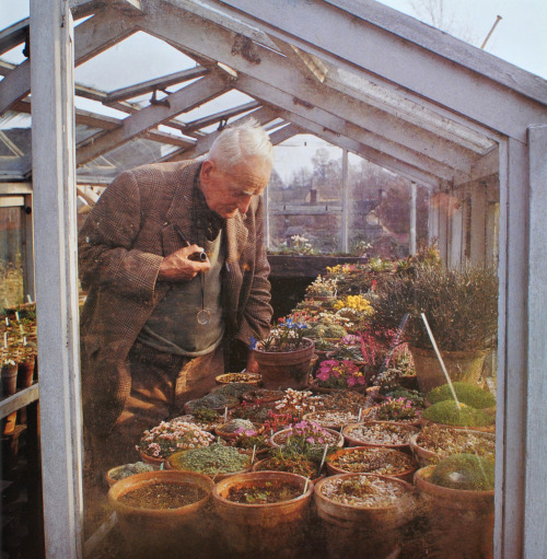Clarence Elliott (a famous English alpine nurseryman) in his greenhouse, as photographed by Valerie Finnis (1924-2006), from her book Garden People: The Photographs of Valerie Finnis (2007). Ms. Finnis traveled the British countryside during the latter half of the 20th Century, photographing dedicated gardeners tending their roses, clipping topiaries, or inspecting their greenhouses. Some of her subjects were well known, like Tolkien and Roald Dahl, while others were nurserymen or plant enthusiasts. She used a Rolleiflex camera, a gift from a friend. Valerie Finnis was awarded the Victoria Medal of Honour in 1975 by the Royal Horticultural Society. According to RHS rules, only 63 horticulturists can hold the award at any given time, in commemoration of Queen Victoria's 63-year-reign. The award was established in 1897. 02/18/2013 UPDATE: Thank you to the editor at Thames & Hudson (London) for clarifying that the gentleman in the photo is Clarence Elliott - not J.R.R. Tolkien as previously identified. (This photograph is floating around on numerous internet sites with Tolkien's name attached to it, however, that is not correct.)