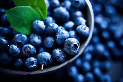 curlscurvesconfidence:  Health benefits of blueberries  Blueberries are very low in calories. 100 g fresh berries provide only 57 calories. However, they possess notable health benefiting plant-nutrients such as soluble dietary fiber, minerals, vitamins, and pigment anti-oxidants that contribute immensely towards optimum health and wellness.   Blueberries are among the highest anti-oxidant value fruits. The ORAC value of 100 g fresh blueberry is 5562 TE (Trolex equivalents). Their antioxidant value largely derived from poly-phenolic anthocyanidin compounds such as chlorogenic acid, tannins, myricetin, quercetin and kaempferol.   In addition, these berries have other flavonoid anti-oxidants such as carotene-β, lutein and zea-xanthin.   Altogether, the phyto-chemical compounds in the blueberry help rid off harmful oxygen-derived free radicals from the body, and thereby, protect the human body against cancers, aging, degenerative diseases, and infections.   Further, research studies suggest that chlorogenic acid in these berries help lower blood sugar levels and control blood-glucose levels in type-II diabetes mellitus condition.   Fresh berries contain a small amount of vitamin C, vitamin A and vitamin E. Altogether these vitamins work as potent anti-oxidants, which help limit free radical mediated injury to the body.   The berries also contain a small amount of B-complex group of vitamins such as niacin, pyridoxine, folates and pantothenic acid. It contains very good amounts of vitamin B-6, niacin, riboflavin, pantothenic acid and folic acid. These vitamins are acting as co-factors help the body metabolize carbohydrates, protein, and fats.   Furthermore, they contain a good amount of minerals like potassium, manganese, copper, iron and zinc. Potassium is an important component of cell and body fluids that helps controlling heart rate and blood pressure. Manganese is used by the body as a co-factor for the antioxidant enzyme, superoxide dismutase. Copper is required for the production of red blood cells. Iron is required for red blood cell formation