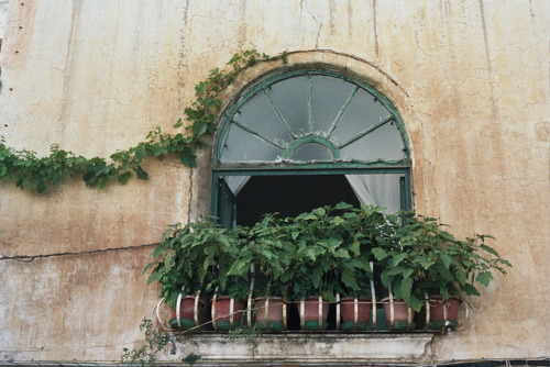 Little Eggplants - Positano - Italy by schorlemädchen on Flickr.
