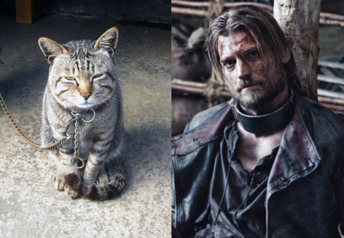 wired:  gq:  GAME OF CATS  OH GOD FINALLY