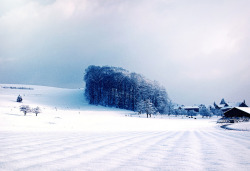 daniellarose1:  Landscape with snow by ceca67 on Flickr.