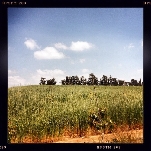 Green fields #green #field #spring #nature  (at בני ציון)