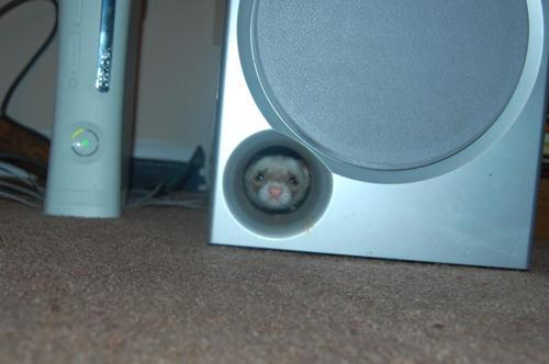 whatareyoudoingferret is my new favourite blog