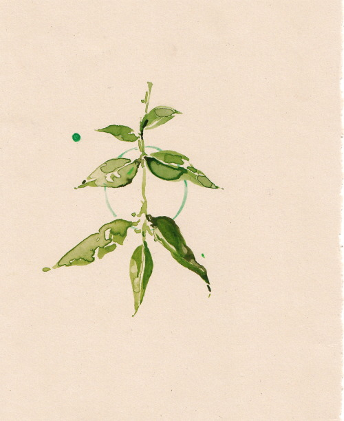 eviecahir:  Im creating a large body of plant-studies. Printed Collection coming soon hopefully-Going to be available for purchase via— http://eviecahir.bigcartel.com/