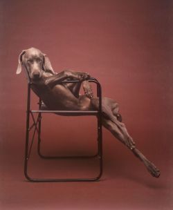 dailymajordeegan:  William Wegman, Lolita, 1990 (+)