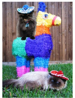Happy Cinco de Mayo!  (via babble.com)