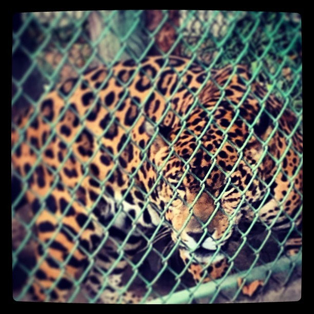 Caged beauty …  (at Zoológico de Zacango)