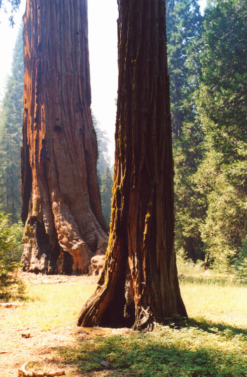h4ilstorm:  California (USA) Sequoia National Park (by tango-)