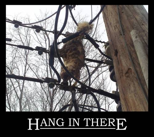 """Hang in There"""
