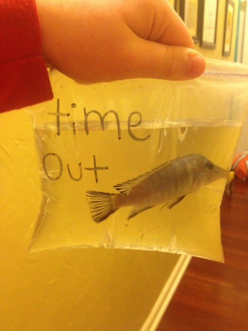 menaturally:  coolestbloginamerica:  I put my fish in time out because he kept trying to eat my other fish.  I hope that little fucker learned his lesson  Lmfao