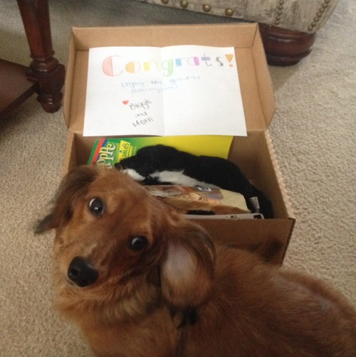 Ella got her prize box in the mail today from biggiethedachshund! She has already had a chicken jerky treat & hidden the Fox toy from me.  Thanks Biggie! You're the best!