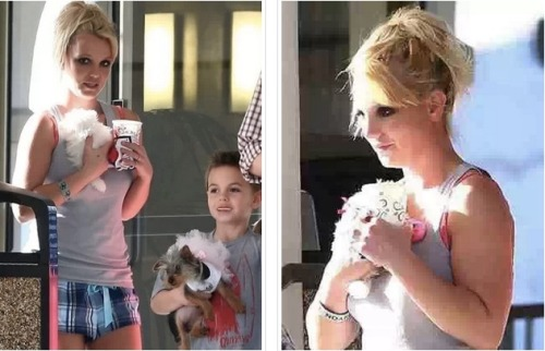 Looks like Britney Spears has a new puppy!