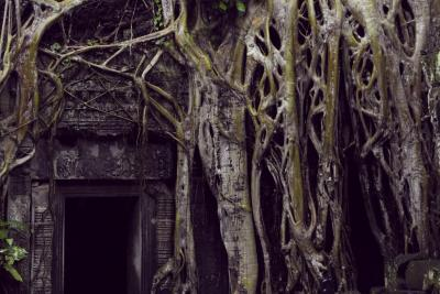 Ancient stone temple door and tree roots, Angkor Wat, Cambodia.