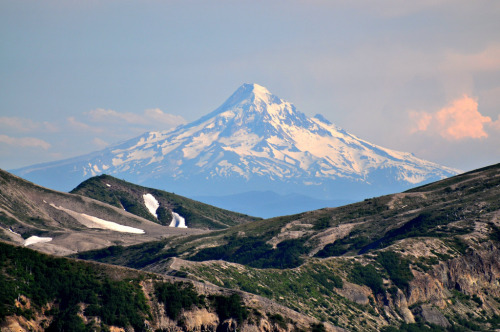 meowntain:  Mt. Hood from Mt. St. Helens (by ystenes)