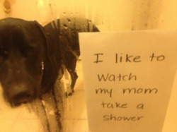 dogshaming:  Holly the creepster  Our new adoptee has one peculiar habit that takes a little getting used to…..  View Post