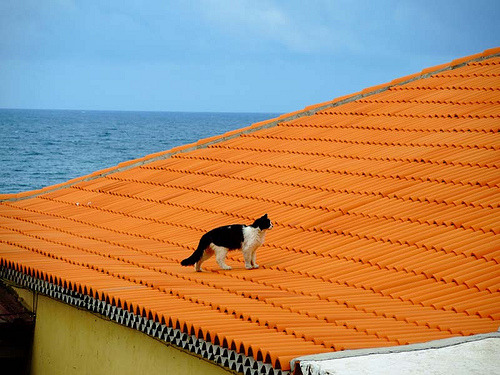 only-cats-photos:  Cat on Roof http://bit.ly/Z9CRhf - Follow me http://bit.ly/Roy1qi