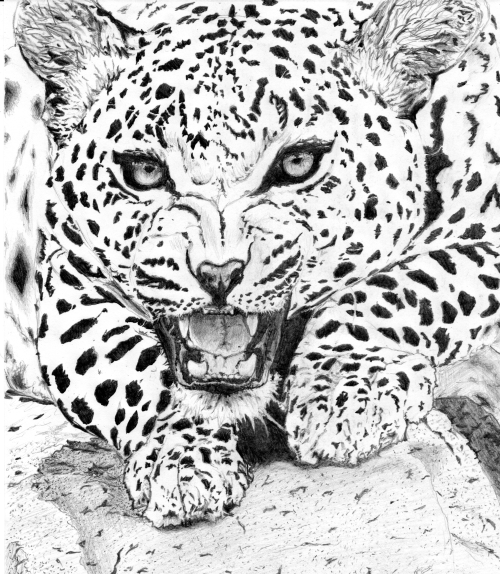Jaguar - Pencil (HB) I'm at my best when I'm lost between pencil and paper.