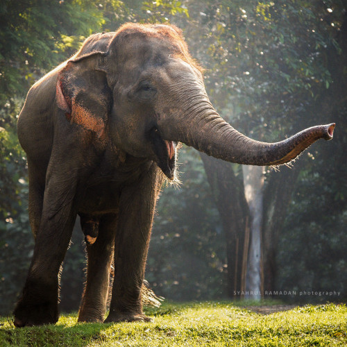 earthandanimals:  Big fun! Photo by Syahrul Ramadan