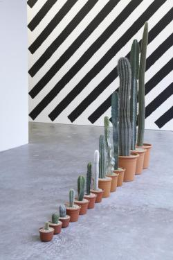 museumuesum:  Martin Creed Work No. 960, 2008 Cacti, 13 Parts, dimensions variable