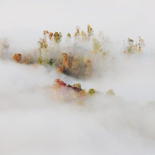 natureconservancy:  Fog in the valley.