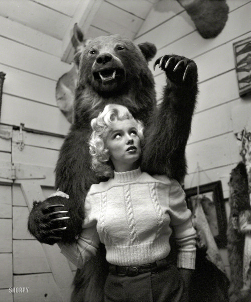 Bearilyn, 1953. (via Shorpy)