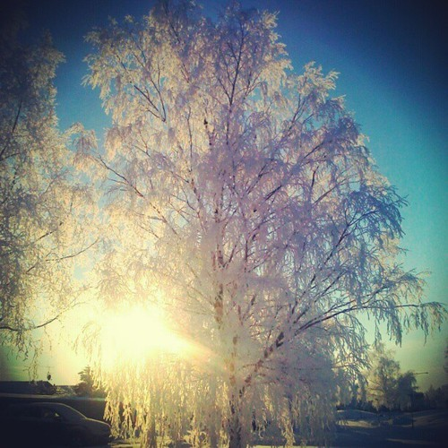 #tree #winter #ice #snow #uppsala #sweden
