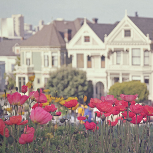 travelingcolors:  Sping in Alamo Square, San Francisco | California (by Liz Rusby)