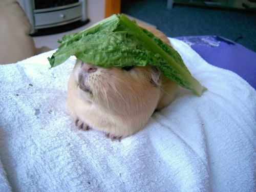 Ummmm this is not the kind of hat I wanted… but at least it's edible!