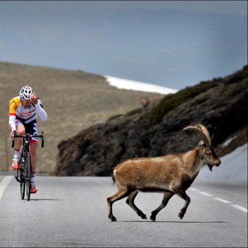 May 2013: Jurgen Van Den Broeck training in Sierra Nevada. (via Timeline Photos)