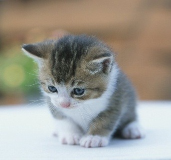 Kawaii of the Day 399 – Baby Kitten http://bit.ly/Z5ItcF