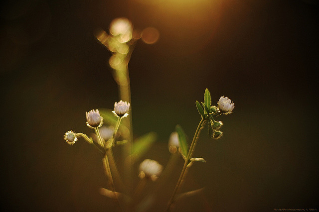 Poetry of light.. [explored] by icemanphotos on Flickr.