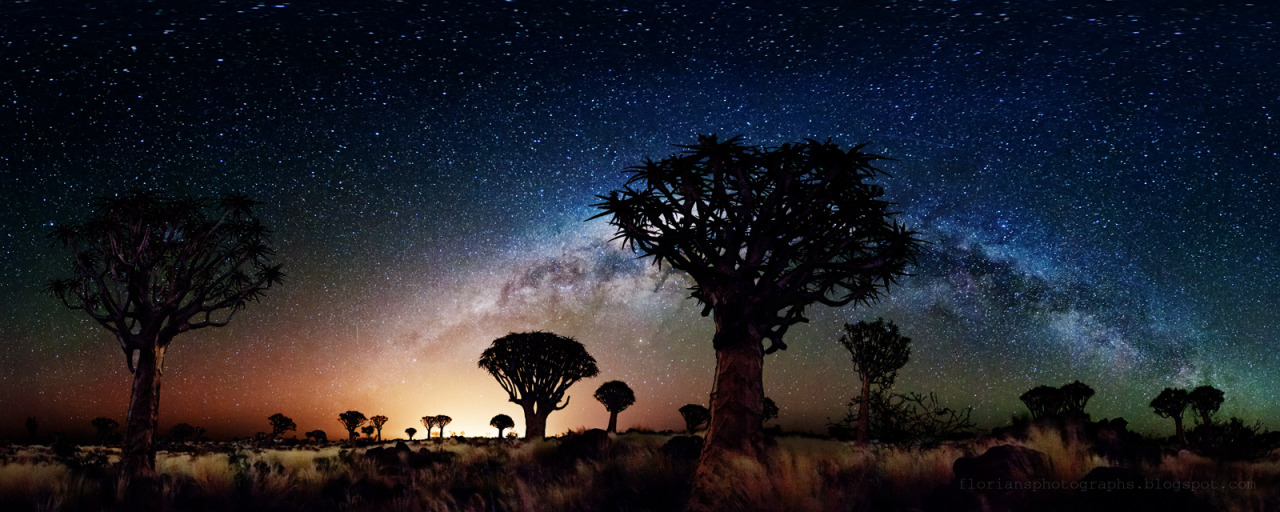 staceythinx:  Milky Way Over Quiver Tree Forest photo series by Florian Breuer