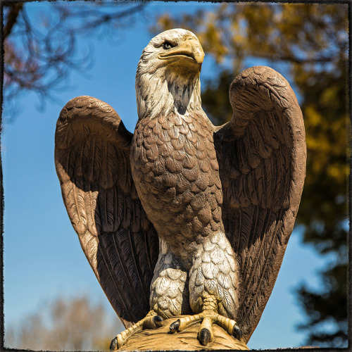 EAGLE EYE on Flickr.EAGLE EYE ~ Saint Joseph, Missouri USA ~ Copyright ©2013 Bob Travaglione. ALL RIGHTS RESERVED ~ www.JoeTown.Us ~ www.FoToEdge.com