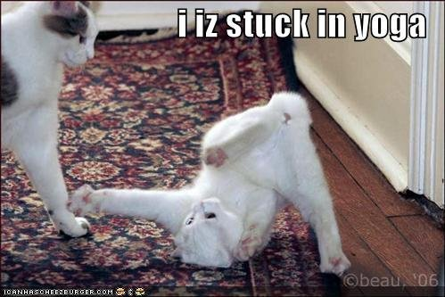 I CAN HAS CHEEZBURGER? » Blog Archive i iz stuck in yoga «