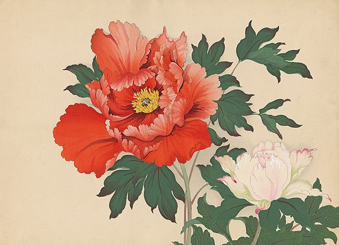 "KONAN Edo, Japan Tree Peonies c. 1930's Woodblock prints Colored ink on paper 15""H x 20.5""W Provenance: Robert O. Muller Collection"