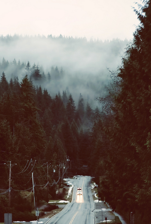 cabin-in-thewoods:  pine—forest:  ☮winter indie nature grunge vintage❅