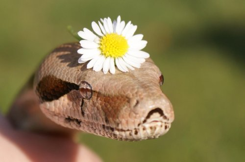 creepicrawlies:  Flower Powerby ~Gecko-Girl
