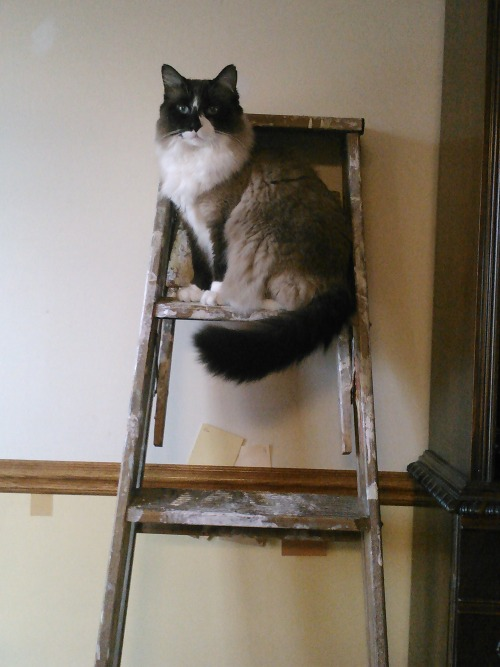 get out of there cat.  you do not know how to paint.  but you do make a great model.  thanks for looking at the camera.