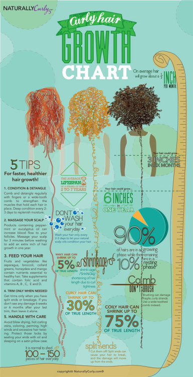 Curly hair guide – Infographic growth chart