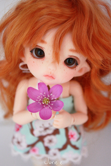 arodeandolls:  Anemone Hepatica by Yorupi on Flickr.  She's so cute!!