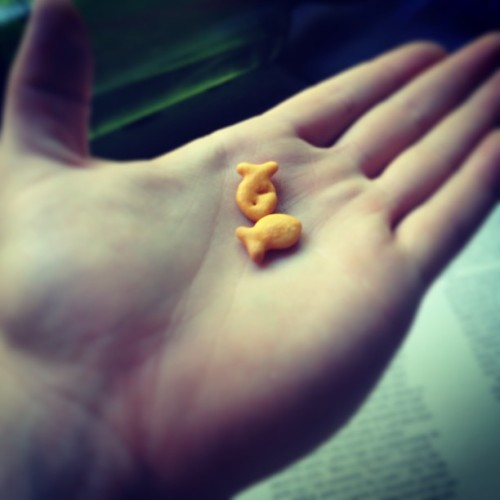 Itty bitty goldfish. #adorable keep swimming fellas #inmybelly