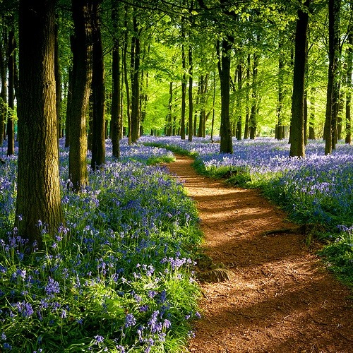 Dockey Wood, Ringshall, England photo via sharon