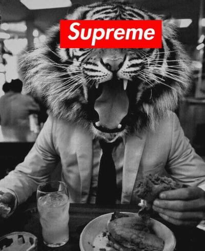 freakyunicorns:  supreme tiger